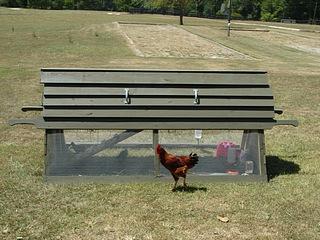 Chicken Ark