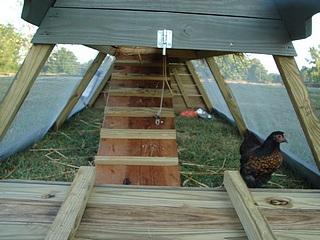 Chicken Ark and Cochin Bantam