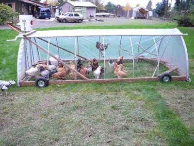 Our country home the third year page 143 cruise for Big chicken tractor