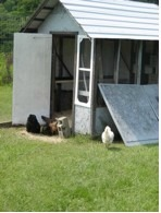 The hatching of a chicken house