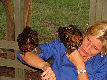 Buff Laced Cochins setting on my wife's shoulder