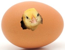 Hatching Chicken Eggs Can Be Addicting, Be Careful You May Like It