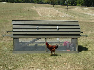 Chicken Ark