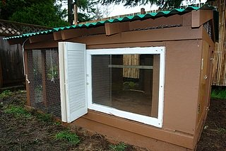 A nicely designed medium sized coop.