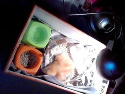 chick in shoebox