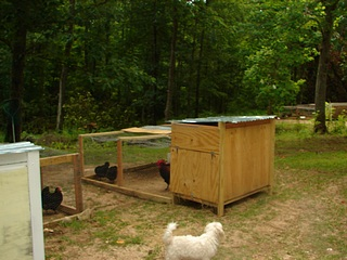Small sized coop.