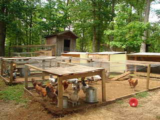 A coop with a good sized chicken run.